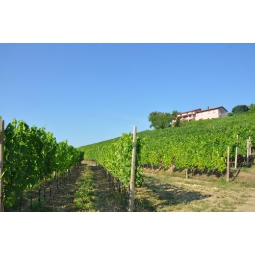 Vinogradi pod hišo