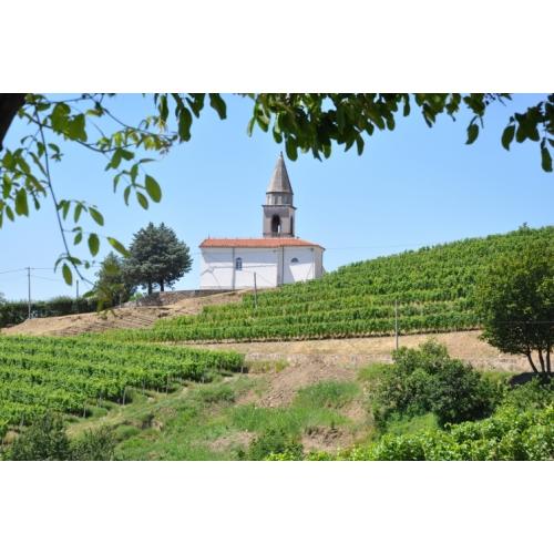 Vinogradi rebule